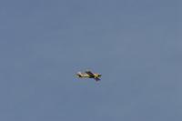 Aerotranio 2007-16